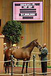 September 09, 2014: Hip #307 Tapit - Super Espresso filly consigned by Stone Farm sold for $1,000,000.    Candice Chavez/ESW/CSM