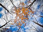 11.1.09 - Below the treetops 2