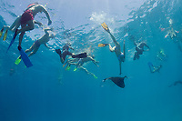 snorkeler tries to touch reef manta ray, Mobula alfredi, feeding on plankton, Hanifaru Bay, Hanifaru Lagoon, Baa Atoll, Maldives, Indian Ocean