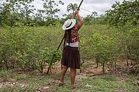 """A Quechua female coca grower known as """"cocalero"""", stands beside a coca harvest, in Entre Rios, Chapare province, Bolivia. November 28, 2019.<br /> Une cultivatrice de coca quechua, connue sous le nom de """"cocalero"""", se tient à côté d'une récolte de coca, à Entre Rios, province du Chapare, Bolivie. 28 novembre 2019."""