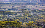 Thorn woodland, Arusha, Tanzania<br /> <br /> Canon EOS-1D X Mark II, EF100-400mm f/4.5-5.6L IS II USM lens, f/8 for 1/640 second, ISO 4000