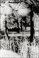 Pine needles and grasses<br />