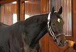 17 January 2010.   Kentucky Stallion Farms.  Pioneerofthe Nile at the Vinery in Lexington, KY.