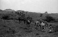 11.2010 Pushkar (Rajasthan)<br /> <br /> Men coming with their camel for the fair.<br /> <br /> Hommes arrivant avec leurs chameaux pour la foire.