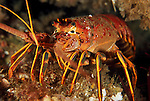 Crustaceans - Crab, Lobster, Shrimp & Barnacle Photos