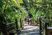 Visitors on the boardwalk at Hawaii Tropical Botanical Garden in Papa'ikou near Hilo, Big Island of Hawai'i.