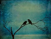 """""""Poe""""try - Ravens"""