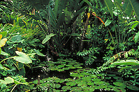Tropical landscaping. garden, gardening, plants, lilly pond, lush vegitation. Florida.