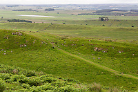 Northumberland,  England, UK.  Military Way Footpath leading to Housesteads Visitor Center, far left, out of picture.