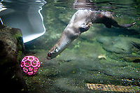 Shedd Aquarium – Chicago, Illinois (Photo by James Brosher)
