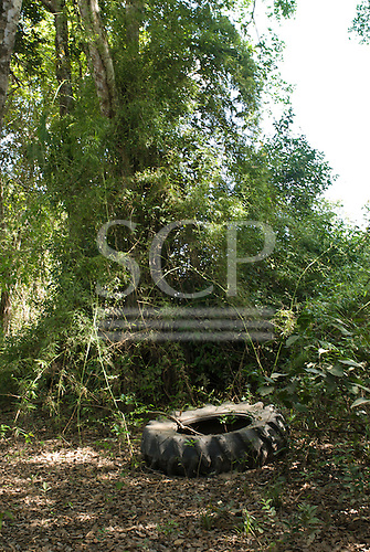 Pará State, Brazil. Abandoned logging road beside the Xingu River (West bank); large vehicle tyre.