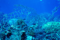 A discarded fishing net poses as a threat to  unsuspecting reef fishes and endangered sea turtles. It also damages the delicate coral reef.