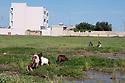 Syria 2019 At the end of the day, In the streets of Amuda, town of Rojava, women, goats and bulding  Syrie 2019 Dans les rues de Amouda,au Rojava , en fin de journée, femmes gardant des chèvres pres d'un nouvel immeuble