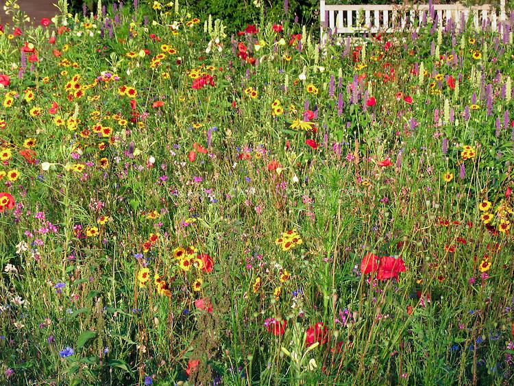 Wildflower meadow field with garden bench naturalistic