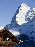 CHE, Schweiz, Kanton Bern, Berner Oberland, Muerren: Chalet, Balkon mit Kuh und Eiger (3.970 m) mit Eiger Nordwand | CHE, Switzerland, Canton Bern, Bernese Oberland, Muerren: chalet, balcony with cow and Eiger with North Face