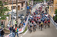 peloton up the 15% climb in Guarene, 15 kilometers from the finish <br /> <br /> 104th Giro d'Italia 2021 (2.UWT)<br /> Stage 3 from Biella to Canale (190km)<br /> <br /> ©kramon