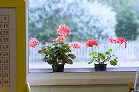 State Primary School.  Classroom flowers.