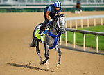 LOUISVILLE, KY - MAY 02: Mohaymen, trained by Kiaran McLaughlin and owned by Shadwell Stable, exercises and prepares during morning workouts for the Kentucky Derby and Kentucky Oaks at Churchill Downs on May 2, 2016 in Louisville, Kentucky. (photo by Scott Serio/Eclipse Sportswire/Getty Images)