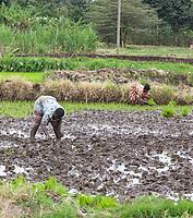 Tanzania, Mto wa Mbu.  Tanzanian Couple Working in Rice Paddy.