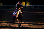 November 4, 2020: Cayenne Pepper, trained by trainer Mrs. John Harrington, exercises in preparation for the Breeders' Cup Filly & Mare Turf at Keeneland Racetrack in Lexington, Kentucky on November 4, 2020. Jon Durr/Eclipse Sportswire/Breeders Cup