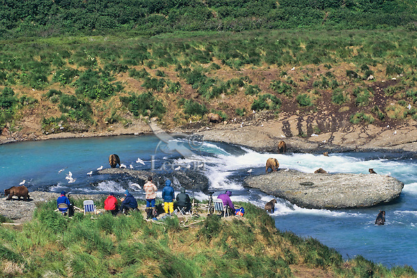 Viewing area for coastal grizzly bears fishing for salmon at McNeil River, Alaska.
