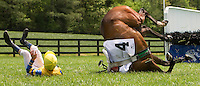 A jockey falls from his horses after failing to land a jump during the Queen's Cup Steeplechase in Mineral Springs, NC.