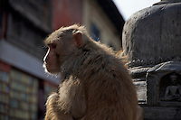 Pasuati Nath Buddhist Monkey Temple, Kathmandu, Nepal