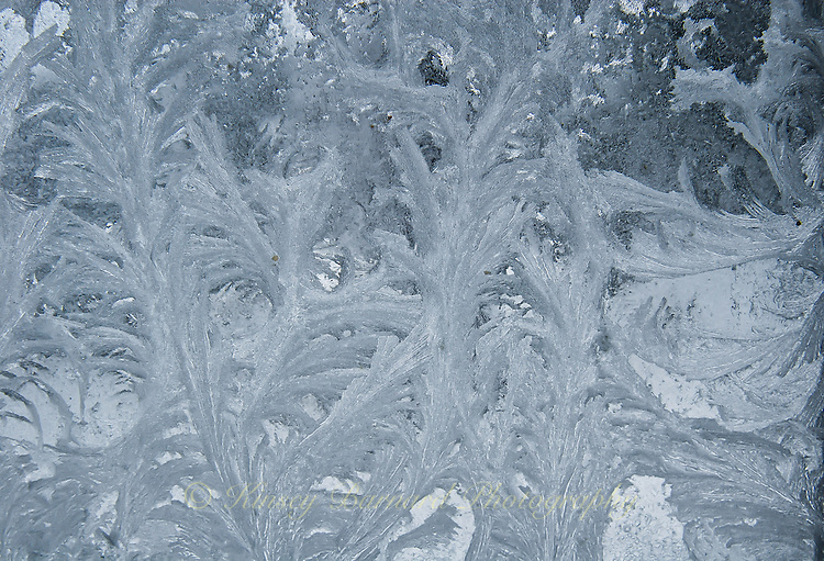 """""""WINDOW CRYSTALS-10""""<br /> <br /> Ice crystals formed on a pane of window glass. The ice crystal formations looking like the leaves of a fern."""