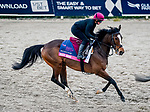 January 23, 2020: Magic Wand gallops on the main track as horses prepare for the Pegasus World Cup Invitational at Gulfstream Park Race Track in Hallandale Beach, Florida. John Voorhees/Eclipse Sportswire/CSM