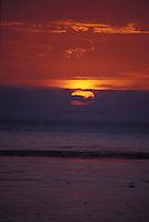 Seabirds at Sunset, baja California, Mexico