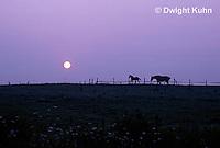 SU30-003z  Sunrise - horses in field