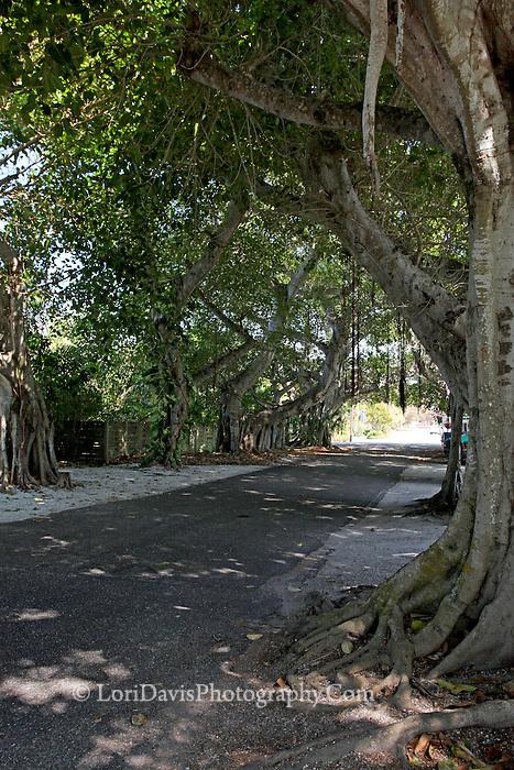 Banyan Street, Boca Grande  #FL1