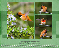 February 2011 Birds of a Feather Calendar