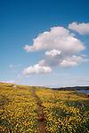 San Juan Islands, Wildflowers path, Yellow Island, The Nature Conservancy, wilderness preserve, Washington State, USA, .
