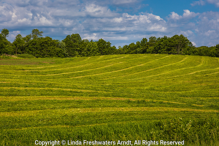 Cut farm field in northern Wisconsin.