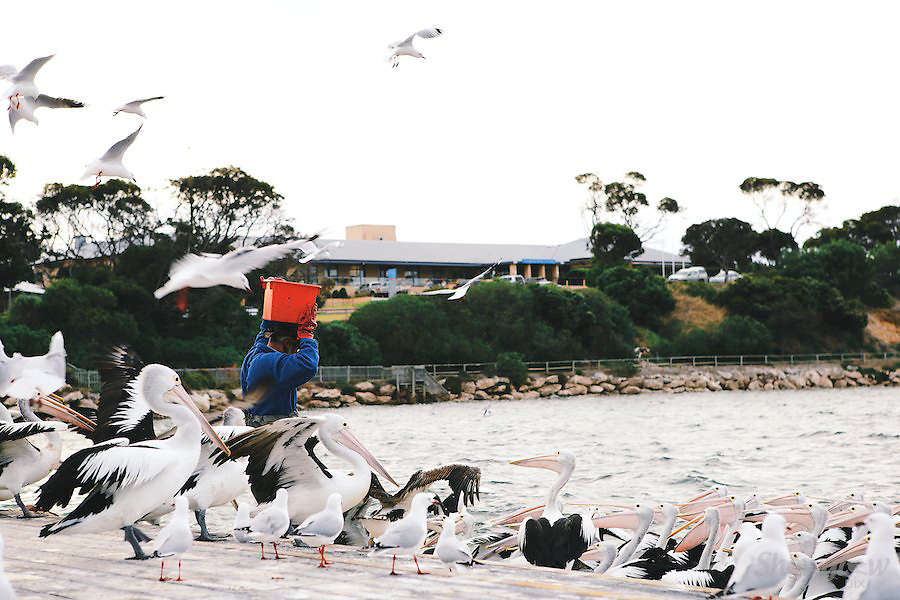 Image Ref: CA1303<br /> Location: Kingscote, Kangaroo Island<br /> Date: 19th April 2014