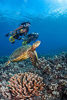 two female divers (MR) on underwater scooters and green sea turtle, Chelonia mydas, Maui, Hawaii, USA, Pacific Ocean