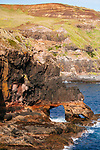 Image Ref: CA998<br /> Location: Bushrangers Bay Track<br /> Date of Shot: 28.09.19