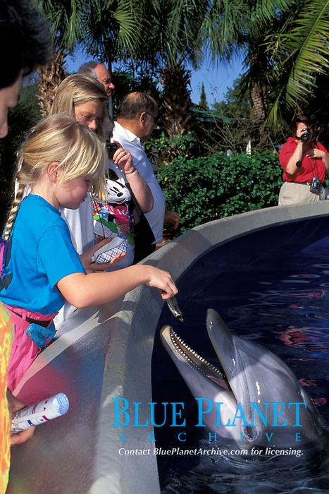 children feed captive bottlenose dolphins, Tursiops truncatus, in shallow petting pool, Orlando, Florida