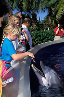 children feed captive bottlenose dolphins, Tursiops truncatus, in shallow petting pool, Orlando, Florida