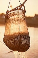 Europe/France/Bretagne/29/Finistère/Saint Guénolé: Retour des sardiniers au port à l'aube - déchargement des bateaux avec la salabarde- détail