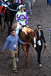 DEL MAR, CA - NOVEMBER 04: Good Magic #6, ridden by Jose Ortiz, walks in the paddock prior to winning the Sentient Jet Breeders' Cup Juvenile race on Day 2 of the 2017 Breeders' Cup World Championships at Del Mar Racing Club on November 4, 2017 in Del Mar, California. (Photo by Kazushi Ishida/Eclipse Sportswire/Breeders Cup)