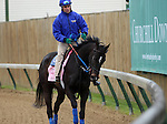 April 26, 2015 Kentucky Derby and Oaks workouts, Churchill Downs. Condo Commando, owner Michael Dubb, Bethlehem Stables, and Elkstone Group, trainer Rudy Rodriguez.  By Tiz Wonderful x Yearly Report (General Meeting)  ©Mary M. Meek/ESW/CSM