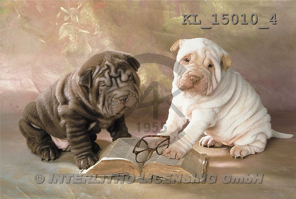 Interlitho, Alberto, ANIMALS, dogs, photos, 2 shar peis, books(KL15010/4,#A#) Hunde, perros