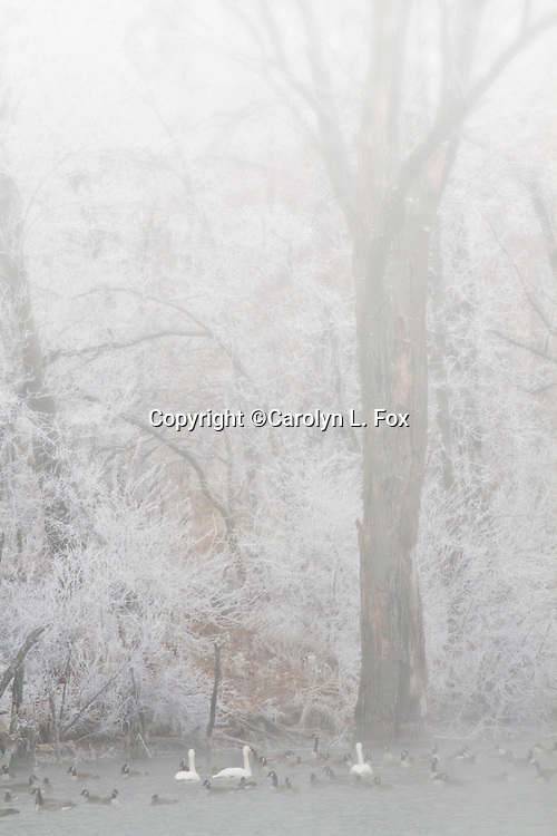 Fog covers a portion of the frost covered trees at Lake Remembrance.