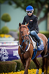 ARCADIA, CA - OCTOBER 29: Gun Runner walks in the paddock at Santa Anita Park on October 29, 2016 in Arcadia, California. (Photo by Alex Evers/Eclipse Sportswire/Getty Images)