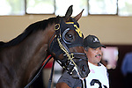 September 07, 2015. Turf Amazon contender Richies Party Girl walks in the paddock before the 5-furlong race for fillies and mares 3 and upward, at  Parx Racing in Bensalem, PA. (Joan Fairman Kanes/ESW/CSM)