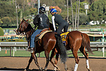 ARCADIA, CA  OCTOBER 30:  Breeders' Cup Classic entrant Math Wizard, trained by Saffie Joseph Jr., exercises in preparation for the Breeders' Cup World Championships at Santa Anita Park in Arcadia, California on October 30, 2019.  (Photo by Casey Phillips/Eclipse Sportswire/CSM)