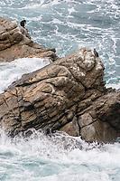 France, Bretagne, (29), Finistère, Cap Sizun, Goulien: Réserve du Cap Sizun