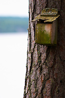 Bird's nesting house on a tree trunk. Lake in the background. Smaland region. Sweden, Europe.